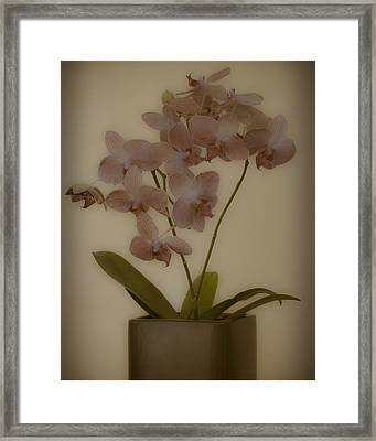 Framed Print featuring the photograph Orchid by James Bethanis