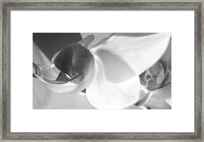 Orchid Framed Print by Kume Bryant