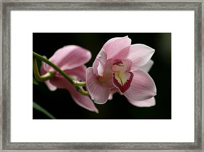 Orchid's  Mystery Framed Print by Valia Bradshaw
