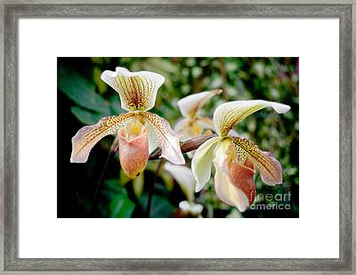 Orchids Framed Print by Yurix Sardinelly