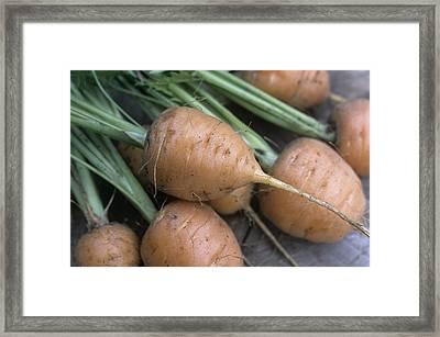 Organic Carrots (daucus Carota 'parmex') Framed Print by Maxine Adcock