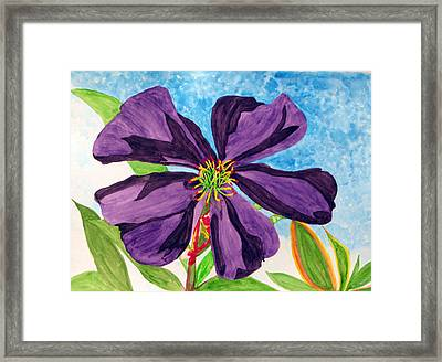 Our Very Bold Tibouchina Framed Print