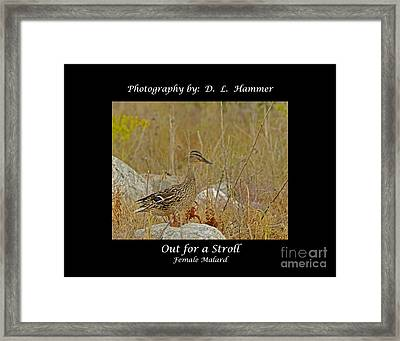 Out For A Stroll Framed Print by Dennis Hammer