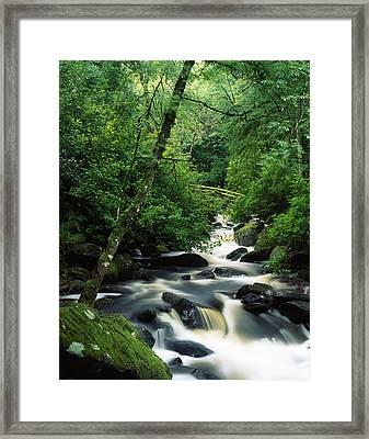 Owengarriff River, Killarney National Framed Print by Richard Cummins