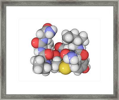 Oxytocin Neurotransmitter Molecule Framed Print