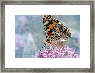 Painted Lady Butterfly Framed Print by Betty LaRue