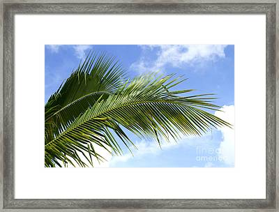 Palm  Framed Print by Blink Images