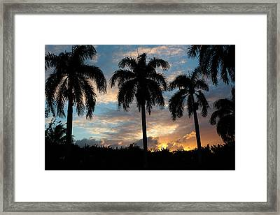 Palm Tree Silhouette Framed Print by Karen Lee Ensley