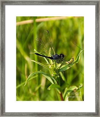 Pals? Framed Print by Ursula Lawrence