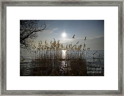 Pampas Grass Framed Print