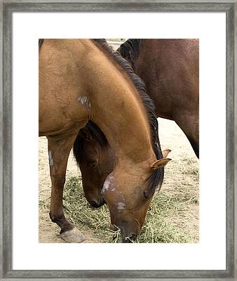 Framed Print featuring the photograph Parallel Ponies by Lorraine Devon Wilke