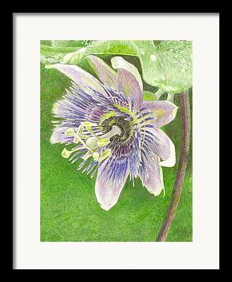Alatocaerulea Framed Prints