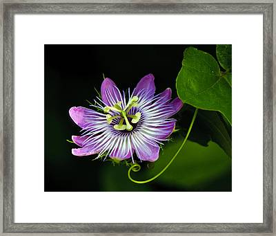 Passion Framed Print by Don Durfee