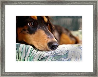 Patient Dachshund  Framed Print by Carmen Del Valle