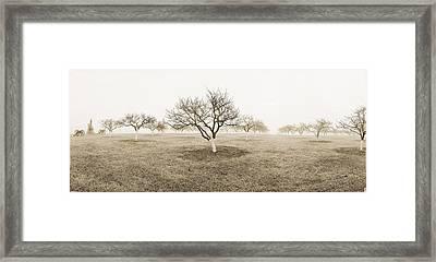 Peach Orchard Gettysburg Framed Print by Jan W Faul