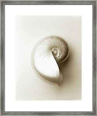 Pearlised Nautilus Sea Shell, Close-up Framed Print by Finn Fox