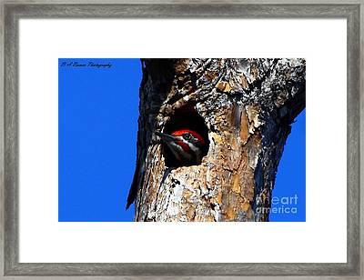 Peeking Out Framed Print by Barbara Bowen