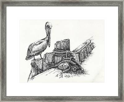 Pelican At Dockside Framed Print