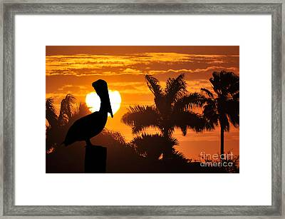 Pelican At Sunset Framed Print by Dan Friend