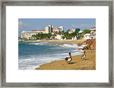 Pelicans On Beach In Mexico Framed Print