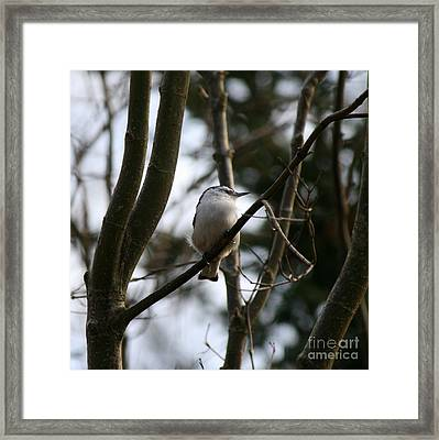 Perched And Content  Framed Print by Neal Eslinger