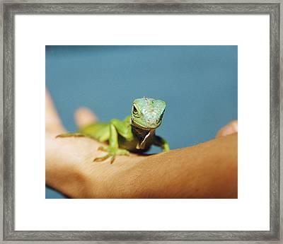 Pet Iguana Framed Print by Cristina Pedrazzini