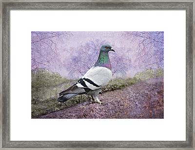 Pigeon In The Park Framed Print by Bonnie Barry
