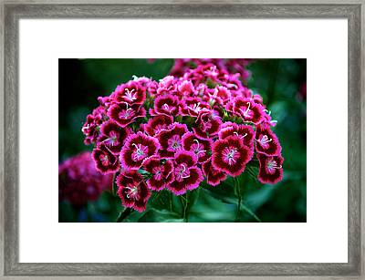Pink Flower Framed Print by Andre Faubert