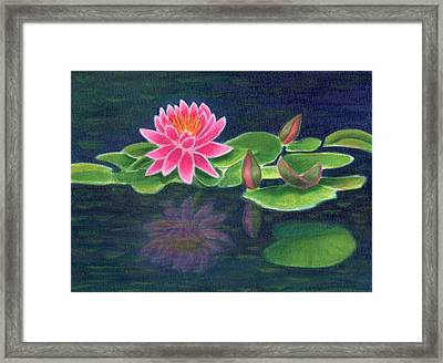 Pink Lily Of The Pond Framed Print
