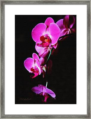 Framed Print featuring the photograph Pink Orchid Trio by Robert Kernodle