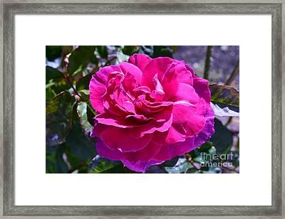Pink Framed Print by Saifon Anaya