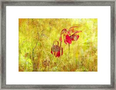 Pitcher Plant Framed Print by Gordon Ripley