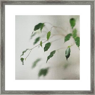 Plant Behind Glass Framed Print