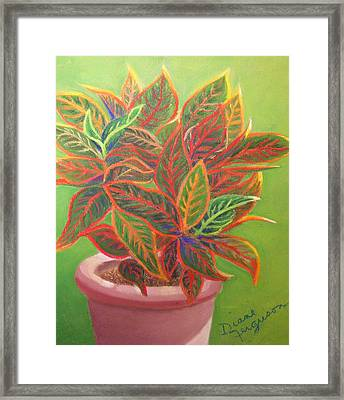 Plant Portrait I Framed Print