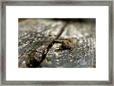 Please Watch Your Step Framed Print by Lois Bryan