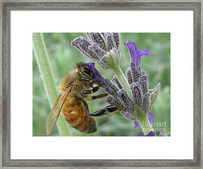 Pollen Catcher Framed Print