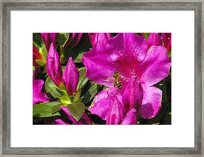 Framed Print featuring the photograph Pollinating  by Brian Wright