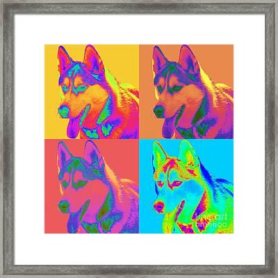 Pop Art Siberian Husky Framed Print by Renae Crevalle