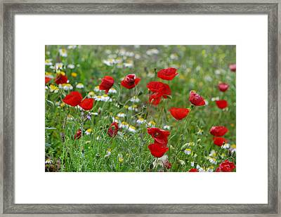 Poppies Framed Print by Guido Montanes Castillo
