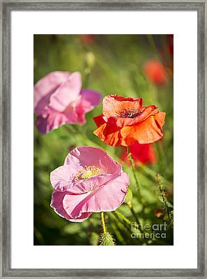 Poppies In A Garden Framed Print
