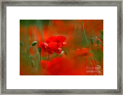 Poppy Flowers 02 Framed Print by Nailia Schwarz