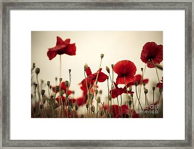 Poppy Flowers 03 Framed Print by Nailia Schwarz