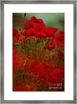 Poppy Flowers 06 Framed Print by Nailia Schwarz