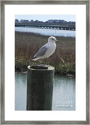 Posing Seagull Framed Print by Gordon Mooneyhan
