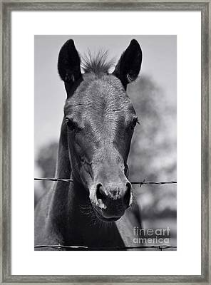 Pretty Girl Framed Print by Juls Adams