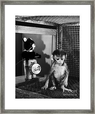 Primate Fear Testing Framed Print by Science Source