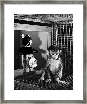 Primate Fear Testing Framed Print