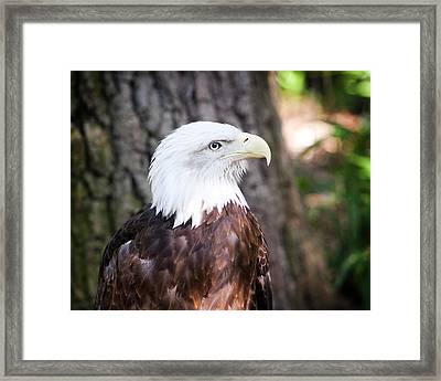 Proud Eagle Framed Print by Tammy Smith