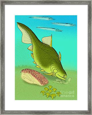 Ptomacanthus Anglicus Framed Print by Stanton Fink