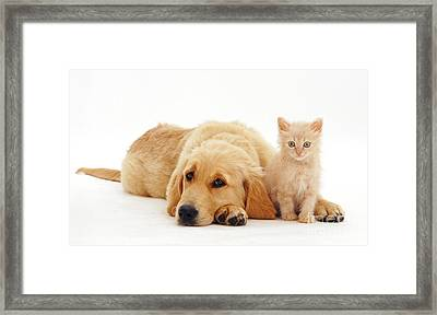 Pup And Kitten Framed Print